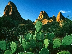 Mountains, Desert, Cactus