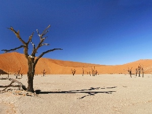 trees, drought, Desert