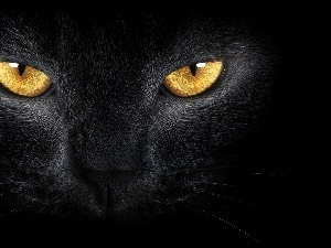 Eyes, Golden, Black, cat