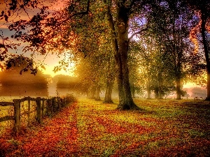 Fance, trees, viewes, autumn, Fog, Leaf