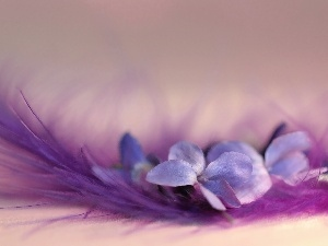 feather, Colourfull Flowers, Viola odorata, Violet