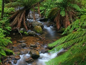 fern, Stones, forest, stream