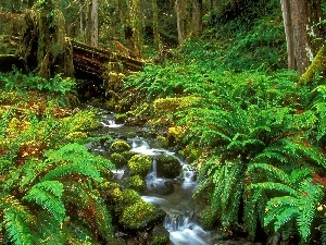 trees, Ferns, stream, Green, thicket, forest, narrow
