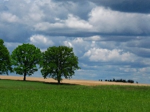 Field, Spring, trees, clouds, viewes