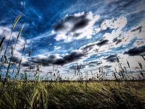 Field, clouds