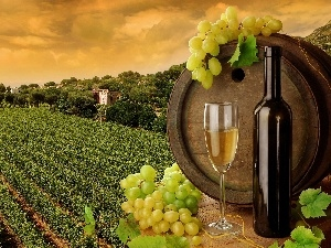 Field, wine glass, grapes, barrel