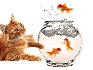 aquarium, fishes, kitten