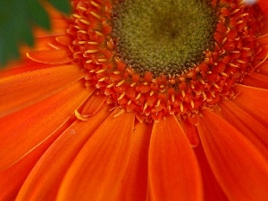 Gerber, flakes, Orange