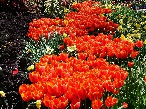 floral, carpet, Orange, Tulips