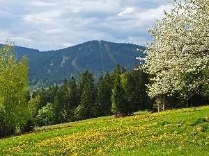Spring, flourishing, Flowers, Mountains, trees, woods, Meadow