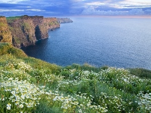 Cliffs, Flowers, Coast