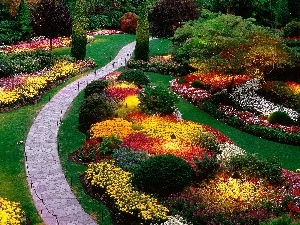 color, Flowers, Garden