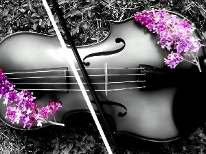 color, Flowers, violin