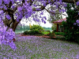 Flowers, trees, house, Garden