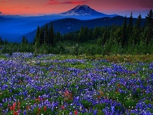 Lupine, Meadow, Mountains, woods