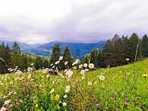 Flowers, Wildflowers, Mountains, woods