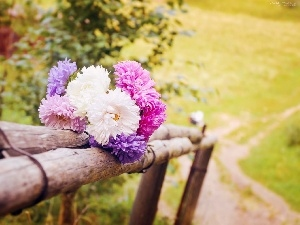Path, Flowers, bouquet, summer, Astra, Meadow, fence