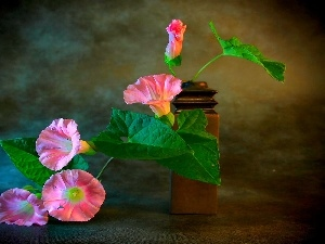 Pink, Flowers, bindweed