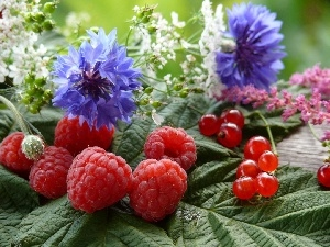 Flowers, Wildflowers, raspberries, currants