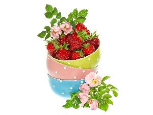 Flowers, strawberries, color, rose, Bowls