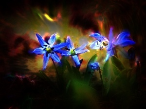 Flowers, Blue, squill, Siberian
