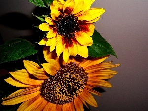 Flowers, Brown, Nice sunflowers, yellow