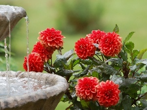 water, Flowers, fountain