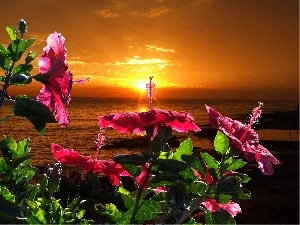 Flowers, sea, west, sun