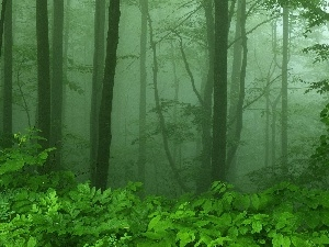 Fog, forest
