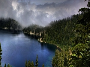 lake, Fog, forest