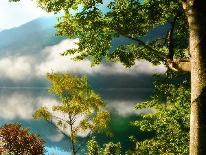Fog, lake, Mountains, woods