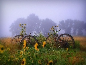 Fog, Nice sunflowers, wheel, wagon