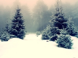 Fog, viewes, forest, winter, trees