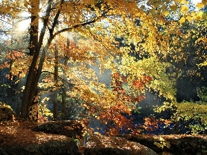 forest, autumn