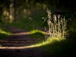 Forest, ##, grass, Path
