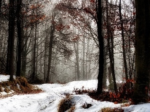 snow, forest, Way