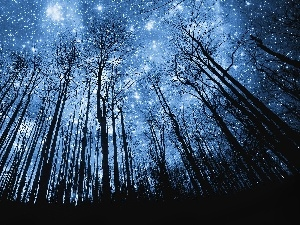 star, forest, Sky