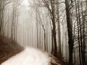 Way, forest, winter
