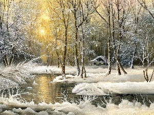 winter, forest, picture