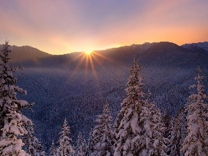 forest, Mountains, rays, winter, sun