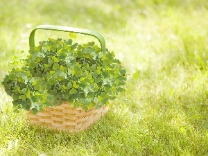 four-leaf, Clovers, basket