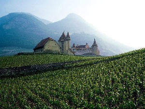 France, vineyard, Mountains, Castle