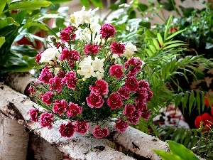 Freesias, Dianthus barbatus, bouquet, flowers
