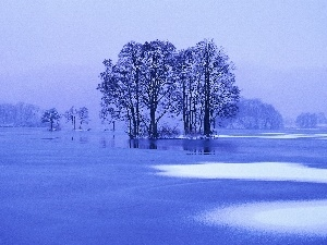 frozen, winter, trees, lake, viewes