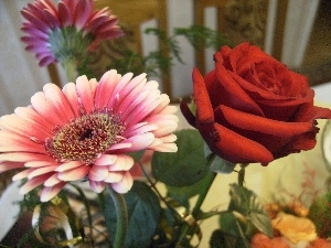 rose, Gerbera, bouquet