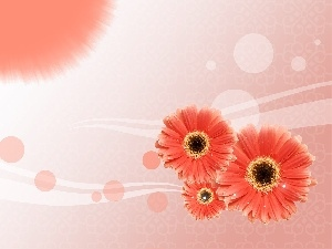 Red, gerberas, Three