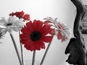 Red, gerberas, White