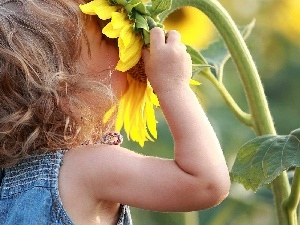Kid, girl, Sunflower