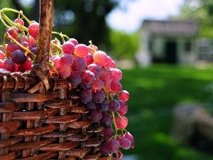 Grapes, basket