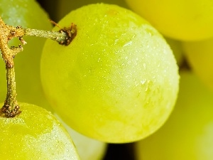Grapes, Yellow